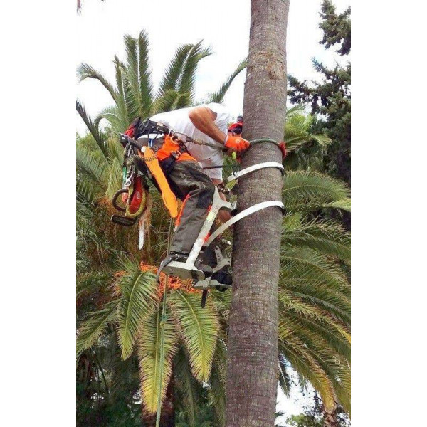 Bicycle PRUNNING palm trees with strapping. ALUMINIUM